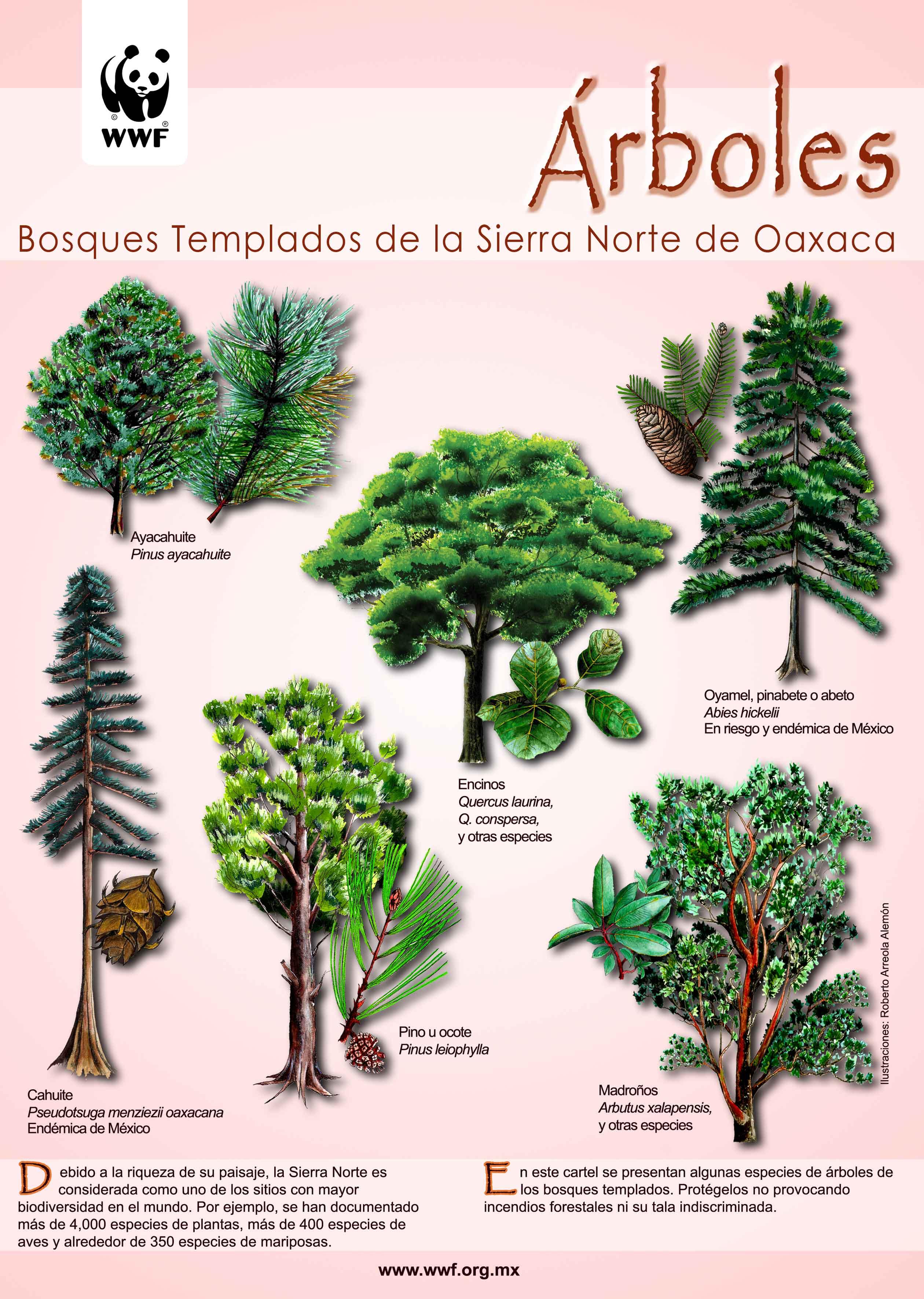 Publicaciones wwf for Cuales son los tipos de arboles