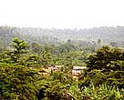 Forest Fringe Community on the Atewa Mountains, Eastern Region, Ghana
