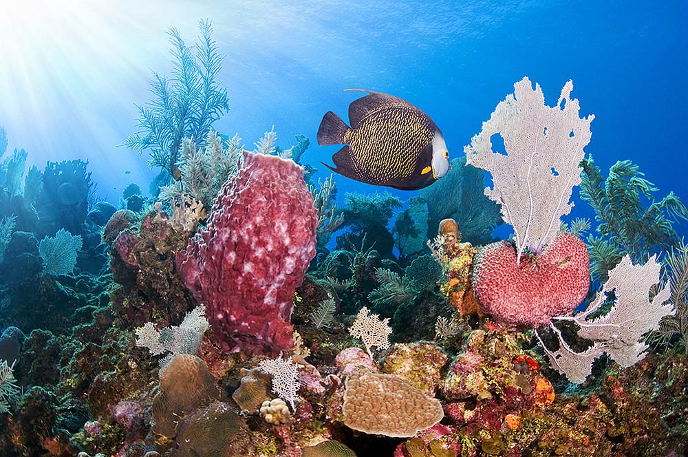 Corales wwf - Fotos fondo del mar ...