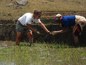 Planting rice with the women of the community