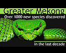 Over 1000 new species discovered in the last decade