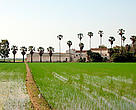Rice farm in the Ebro delta, Spain.