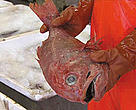 Orange roughy populations have already collapsed in some deep-sea areas.