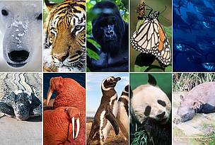 10 species to watch in 2010 / ©: Clockwise (left to right): Fritz Pölking / WWF; David Lawson / WWF-UK; Martin Harvey / WWF; Fritz Pölking / WWF; Brian J. Skerry / National Geographic Stock / WWF; WWF Greater Mekong; Martin Harvey / WWF; Michel Gunther / WWF; Kevin Schafer / WWF; Ronald Petocz / WWF