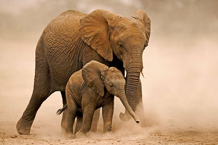 Quiz: Are you elephantastic?