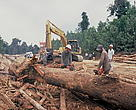 Logging activities in Tesso Nilo, Sumatra, Indonesia.