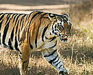 The 'Indian tiger' should get ready for clean ener