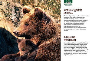 The bear and forest health