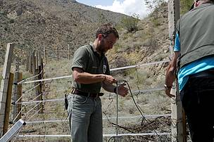 Electric fences installations in the pomegranate plantation