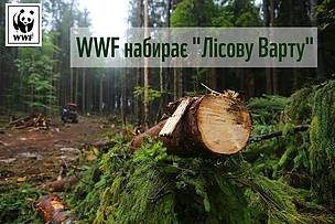 Forest watch program in Ukraine.
