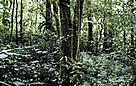 Swamp forest in the Kerinci-Seblat National Park.  / ©: WWF-Canon / Mauri RAUTKARI