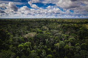 bosque tropical amazónico