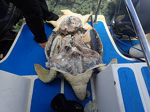 Fighting the marine turtle trade in Malaysia