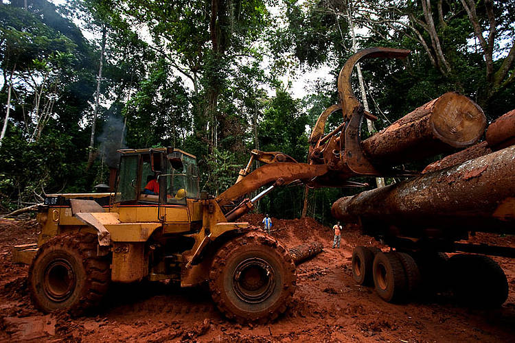 WWF assessment of FSC regional Congo Basin and PAFC Gabon certification schemes