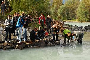 40,000 native fish released into the Inn river will help restore the declining fish populations in this important tributary of the Danube.