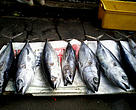 Pacific water is blessed with abundance of varied fish pieces. Here is the picture of tuna that was sold in Suva market.