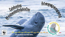 © WWF Greater Mekong