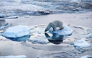 Polar bear summit to address climate threat