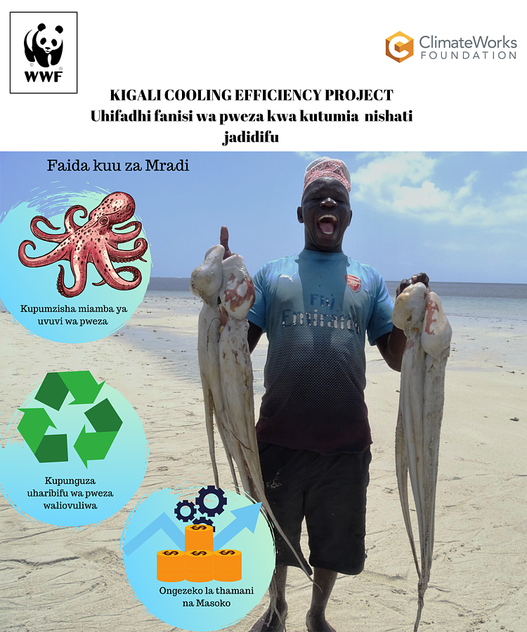 New Project to Scale Up Efficient, Clean Cooling Systems for Octopus Fisheries Launched in Kilwa