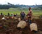 Potato farmers of Phobjikha. Bhutan's economy is based on agriculture and forestry.