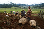 Potato farmers of Phobjikha. Bhutan's economy is based on agriculture and forestry. © Karma Jigme/WWF Bhutan