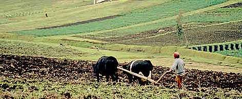 Farming in the rich volcanic soil in the Andes Mountains. Near Cayambe, Pichincha, Ecuador. rel=