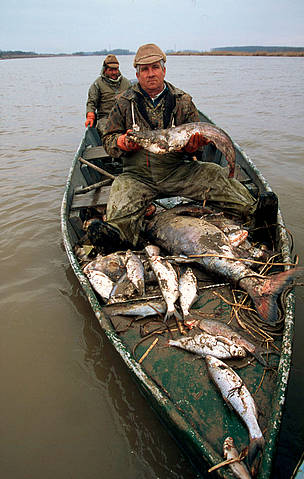 Fishermen on boat with collected dead fish from the River February 2000 - Cyanide pollution, Tisza ...  	© WWF / Nigel DICKINSON