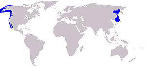 Gray whale distribution.      © Wikipedia