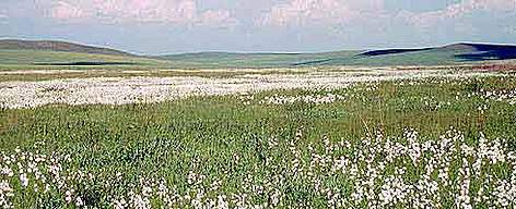 Moorland in the Daurian Steppe Mongolia. rel=