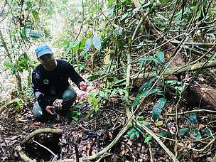 Snares found during Ops Jerat., WWF Malaysia, Heart of Borneo, HoB, Sabah, Borneo Elephant