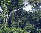 Forest in DRC