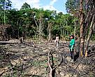 Small-scale slash and burn agriculture on forest edge in Mai Ndombe region, DRC.