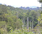 Forest in Khamkeut District, Bpolikhamxay Provine, Laos