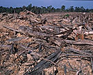 Banda Aceh forests in ruin following the tsunami.