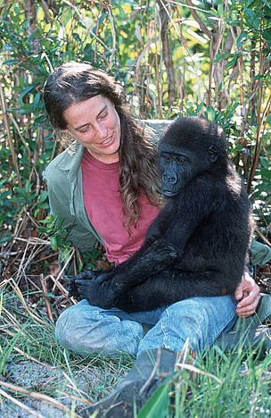 Western Lowland Gorilla. Mpassa project manager Liz Pearson with orphaned gorillas reintroduced ...  	© WWF / Martin HARVEY