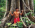 The Yanomami people of Roraima Province in Brazil are losing their homes as the Amazon forests disappear.<BR>