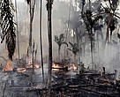 According to WWF, the combination of climate change and deforestation increases the drying effect of dead trees that fuels forests fires.