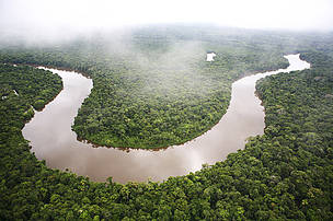 The Amazon rain forest. Loreto region, Peru.