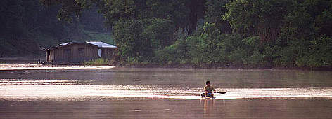 the amazon river wwf
