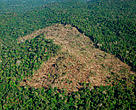 Forest clearing for pasture for cattle, Juruena National Park, Brazil.