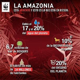 Declaración de WWF sobre los devastadores incendios forestales en la A