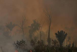 Declaración de WWF-Brasil: ONGs acusadas de provocar incendios en la A