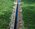Drainage canal inside APRIL acacia concession on peat soil in Pelalawan, Riau, Sumatra.