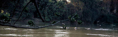 The Srepok river near Yok Don National Park. rel=