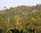 Atewa forest in Ghana threatened by bauxite mine