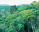The Atlantic Forest has extemely high biodiversity, but is also one of the most endangered rainforests on earth.