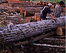 It is estimated that Australia imports more than US$845 million worth of illegal timber and wood products each year. <p><b>European Commission </p></b>