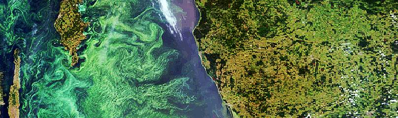A phytoplankton (algal) bloom fills much of the Baltic Sea. Summer 2005.  	© ESA