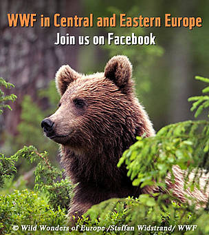 / ©: Wild Wonders of Europe / Staffan Widstrand / WWF