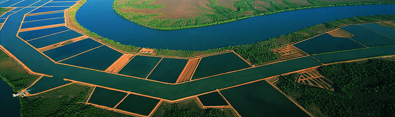 Aerial shot of fish ponds with mangroves in the background. / ©: Bertrand Coûteaux